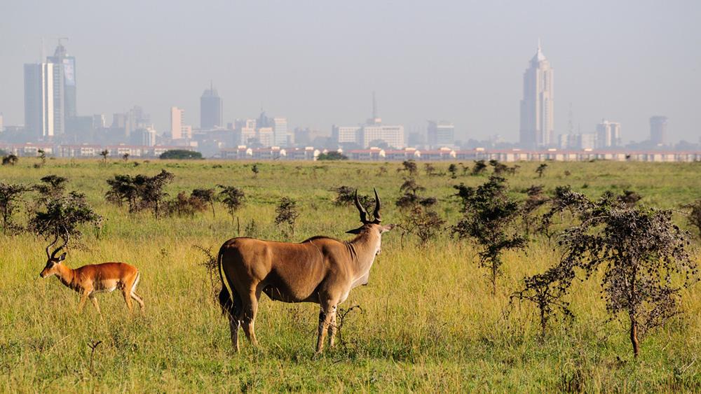 Safari_Sense_Kenya_Destinations_Welcome_Karibu