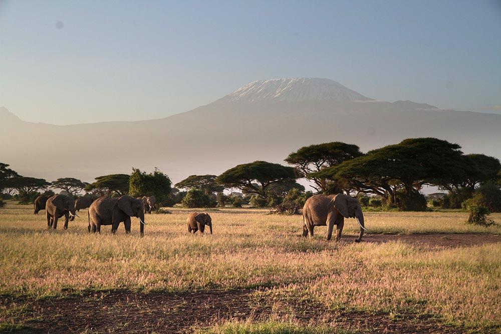 Safari_Sense_Amboseli_elephants