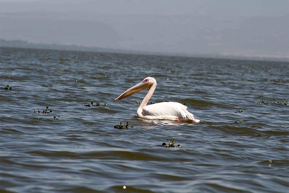 Safari_Sense_Naivasha_birdlife