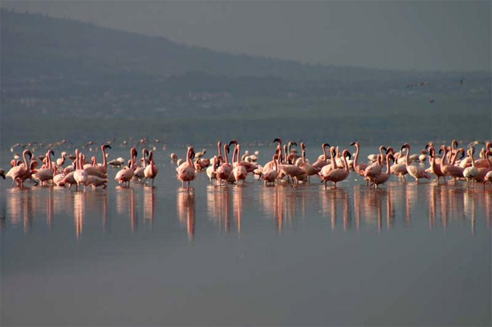 Safari_Sense_Nakuru_birdlife