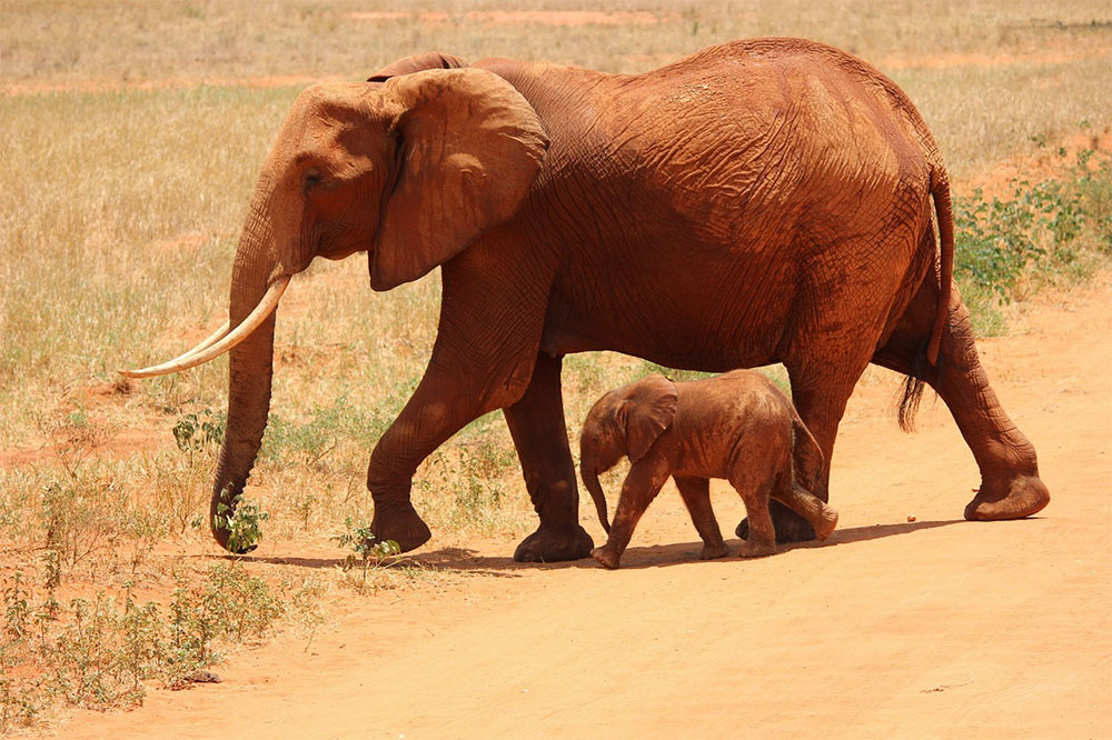 safari-sense-samburu-shaba-elephant-herd