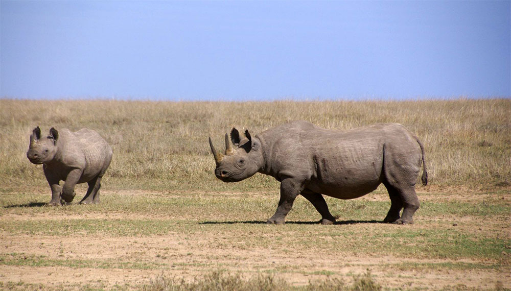 safari-sense-why-visit-rhinos