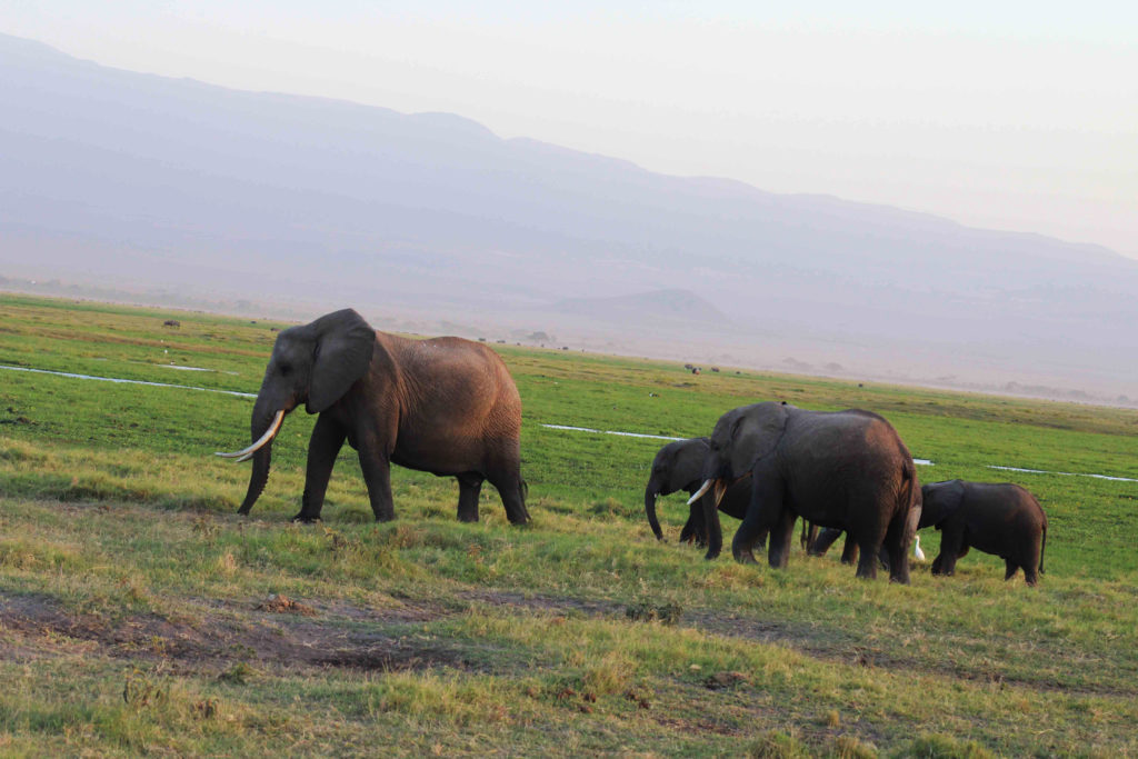 Safari_sense_Essential_Amboseli