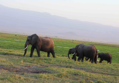Essential Destination: Amboseli