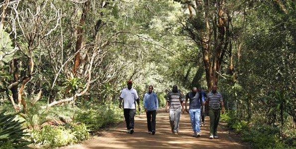 Birdnificent©: Nairobi Arboretum