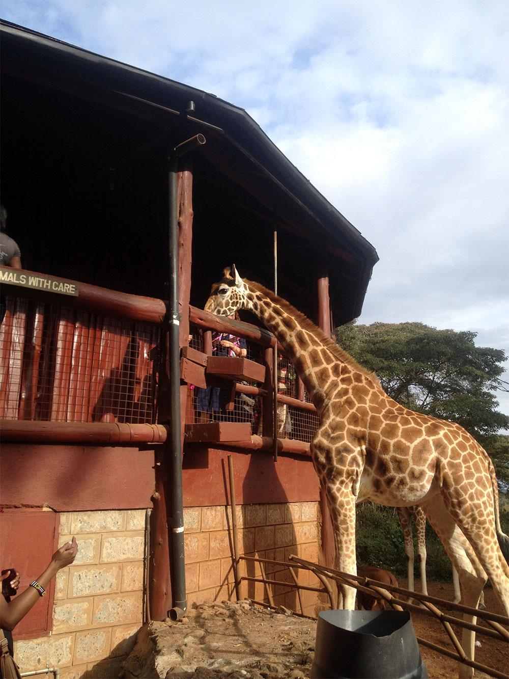 Discover Nairobi: Full Day City Tour
