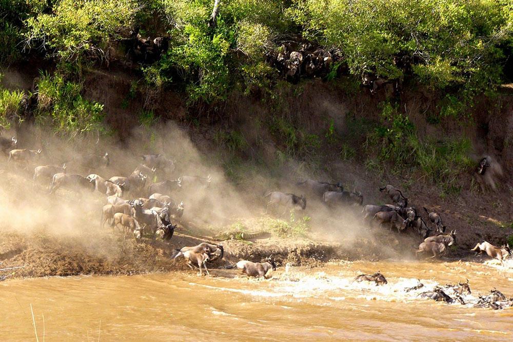 Lucky Game Drive at Maasai Mara
