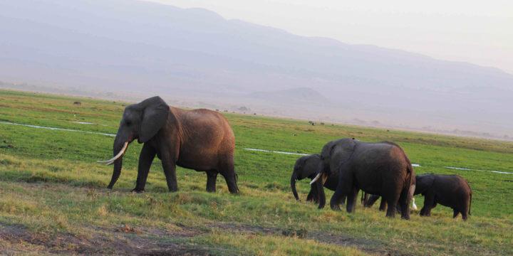 Essential Destination: Amboseli