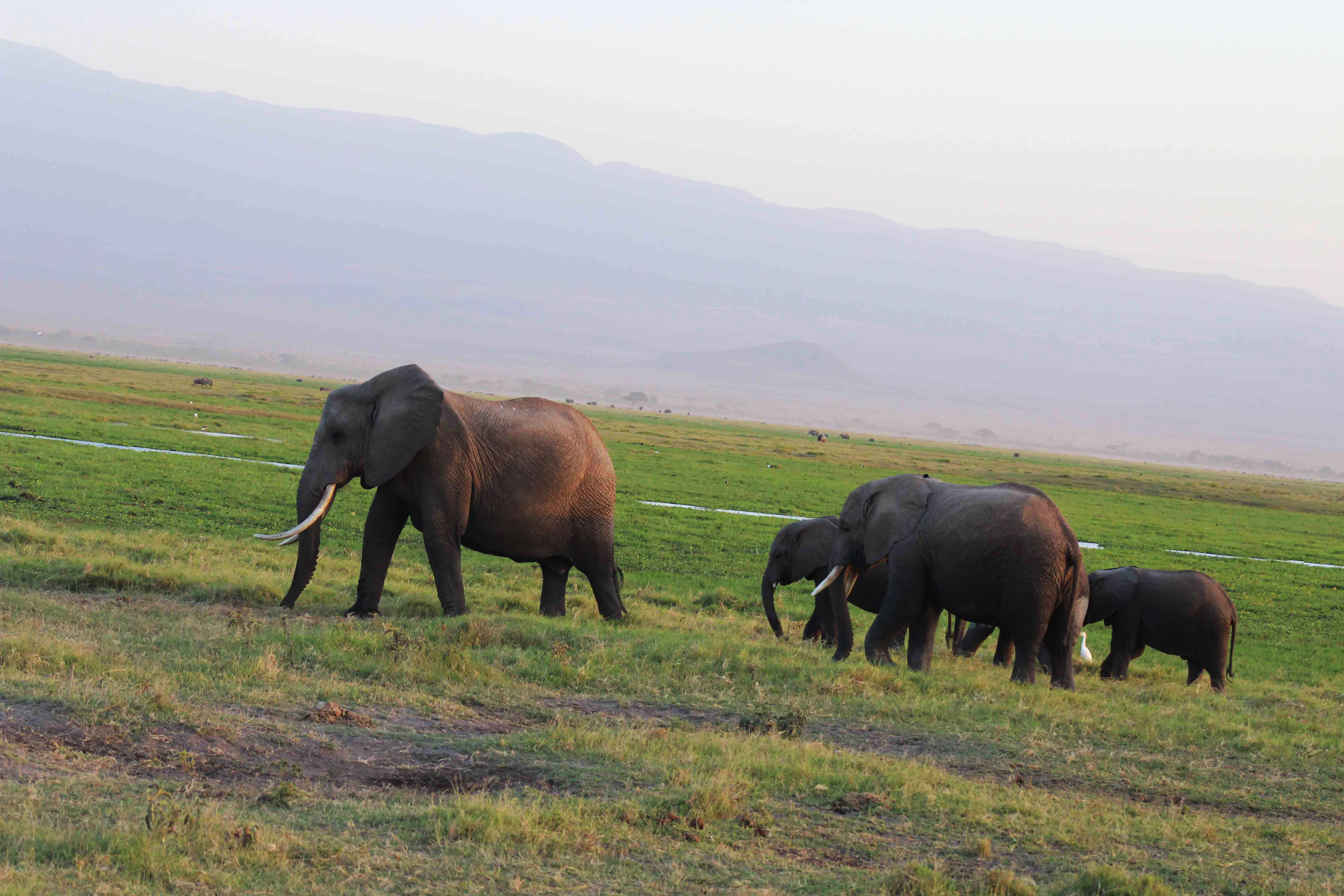 Elephants are abundant and the gentle giants are impressive!