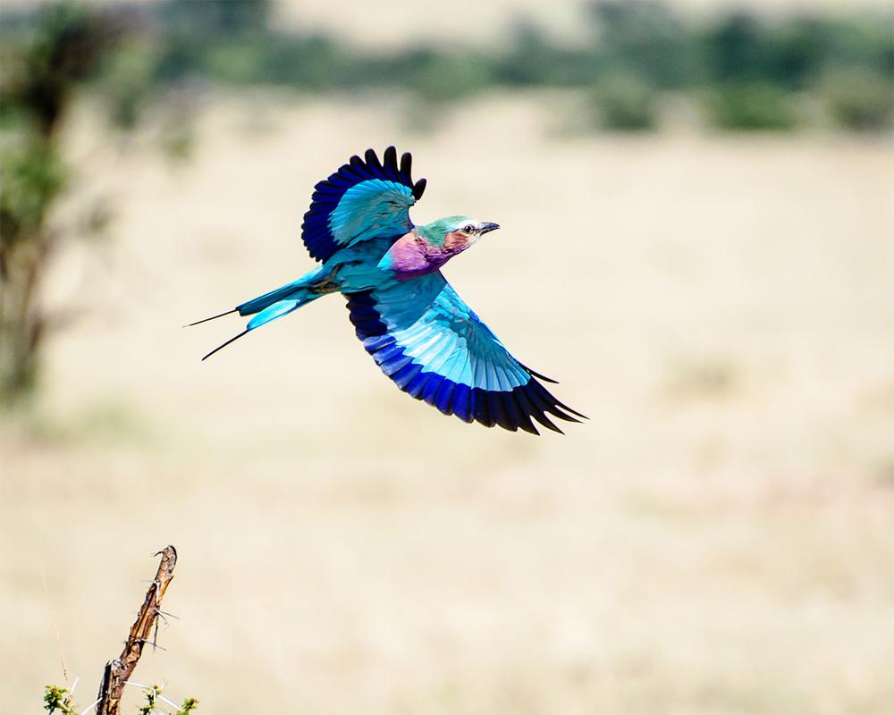 Safari_Sense_Ewaso_Birding_Blog